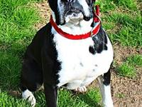 Monroe's story Monroe Female Boxer Approx 4 years