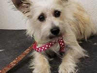 Montana's story Montana came from a shelter. She was