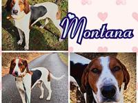 My story Montana is a fine young dog with a great