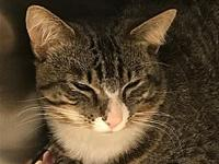My story Primary Color: Brown Tabby Secondary Color: