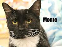 Monte's story The adoption fee is $85.00 with an