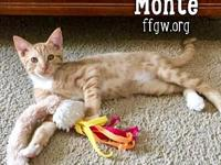 Monte's story An approved adoption application is