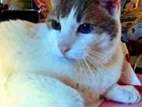 Montgomery's story Montgomery: 9 yr old male, odd-eyed,