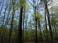 The Highway 35 Tract is +/ -263 acres of varied forest