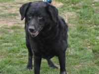 Montie is a 10+ year old Black Lab who was rescued from