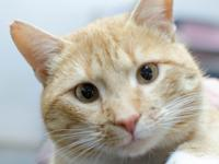 Visit Monty at our Adoption Center open Monday through
