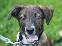 Monty's story This puppy is in Tennessee. Adoption