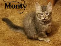 My story Hi there. My name is Monty. Aren't I adorable?