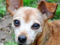 Mookie's story Say hello to our sweet senior, Mookie.