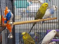 Moon is a green and yellow female budgie, born in 2014.
