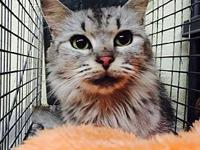 Moon's story I am a female cat, 1 yr & 10 months old,