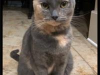 Moonface Moonface is a sweet little dilute tortie girl.