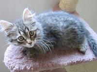 MoonPie's story MoonPie is one of four kittens that