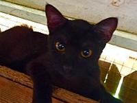 Moonshadow's story Moonshadow is a young female ready