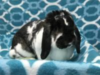 Mopsy is a sweet lop who hasn't had the best life. From