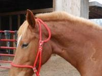 Morgan - Lexi - Large - Adult - Female - Horse Lexi is