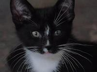 Morgana's story This beautiful and playful kitten is