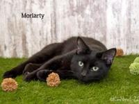 My story Hi there, I'm Moriarty and I am 2 years old. I