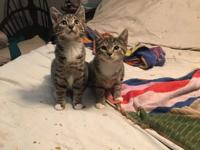 ****courtesy listing**** Mork and Mindy are 16 weeks