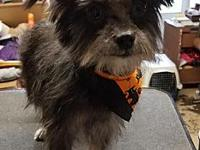 Mork's story Mork is a 2 year old yorkie/maltese mix.