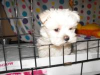 2/3 Maltese and 1/3 Yorkie. I have a lot personality,