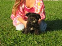 I have 1 Morkie female left. She is very sweet and