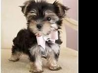 I have been looking for a small female dog/puppy. I