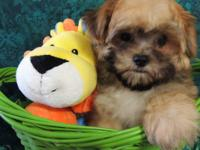 I HAVE TWO OF THE CUTEST LITTLE MORKIE PUPS. THIS