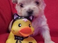 I have 5 morkie puppies 3 males and 2 females. They