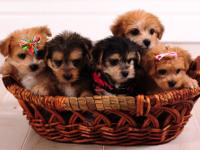 """Rudy, Clarise , and Santa baby "" Puppies, just in time"
