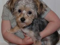 Meet Mollie! A sweet little lapdog, Mollie will only be