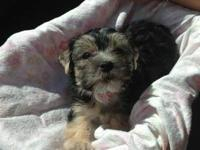 I have some Morkie pups that are 8 weeks old born Nov
