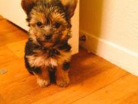 I have 2 adorable morkie pups looking for a new home.