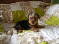 ADORABLE LITTLE MALE, LOVES TO PLAY, VERY CUTE, OWN