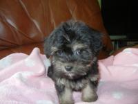 BEAUTIFUL LITTLE FEMALE, VERY SWEET, HOME RAISED,