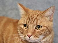 Morris's story Morris is a handsome 1-year-old male