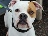 Morty's story Meet Morty! This big hunk is as handsome