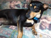 Morty is a very sweet, loving dog, who is a doxie mix