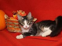 Moscato's story Moscato is a handsome male kitten who