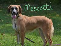 Moscotti's story Moscotti is a sweet loving puppy