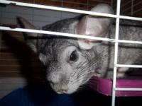 I have a mother and baby chinchilla combination that I