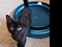 Mother Nature Litter : Tsunami kitten's story Little