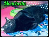 My story Mouchetta Mouchetta is an very sweet, solid