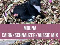 Meet Mouna, Mom was a Cairn Terrier/Schnauzer mix and