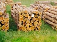 Number one grade mountain cedar fence posts for sale.
