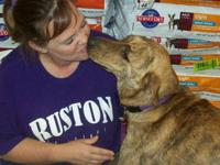 Mountain Cur - Bert - Large - Young - Male - Dog One