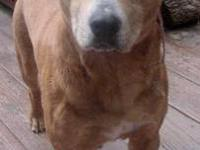 Mountain Cur - Ernie - Large - Adult - Male - Dog