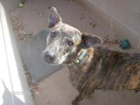 Mountain Cur - Leesa - Medium - Adult - Female - Dog