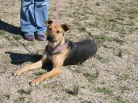 Mountain Cur - Ms Reese - Medium - Adult - Female -