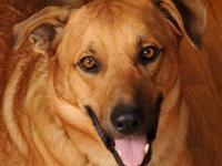 Mountain Cur - Peter - Large - Adult - Male - Dog Peter